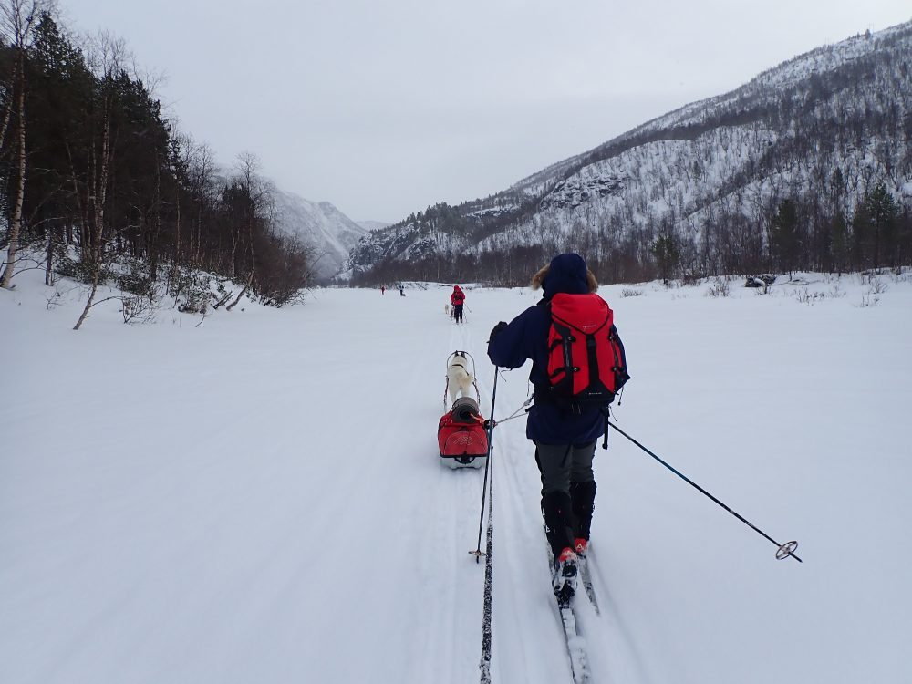 skiløper, vinter, hund, tur, dal, snø